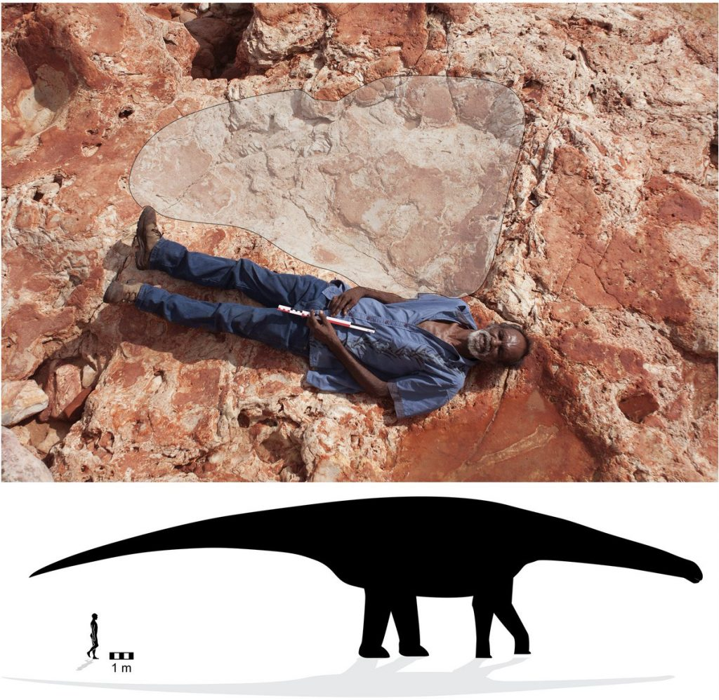 Dr Steve Salisbury - Palaeontologist - Dinosaurs - Law Boss Richard Hunter and a 1.7m sauropod track - The Andy Social Podcast